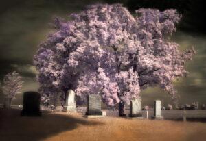 Normand Métivier, Ives Cemetery, Compton, 2010, photographie numérique à l'infrarouge.